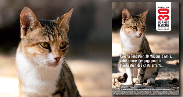 Villers-Saint-Paul : Campagne de stérilisation des chats errants